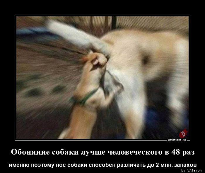 Обоняние собаки лучше человеческого в 48 раз
