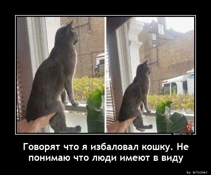 Говорят что я избаловал кошку. Не  понимаю что люди имеют в виду
