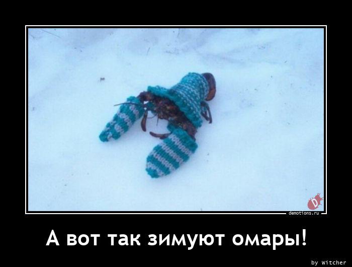 А вот так зимуют омары!