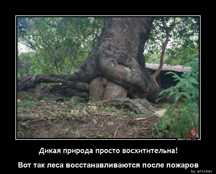 Дикая природа просто восхитительна!