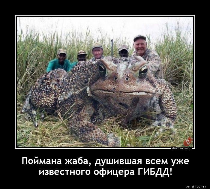 Поймана жаба, душившая всем уже известного офицера ГИБДД!