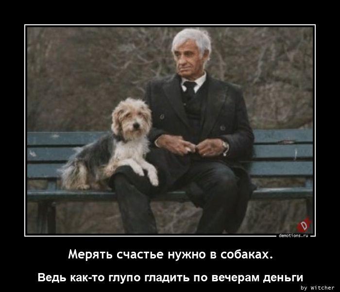 Мерять счастье нужно в собаках.