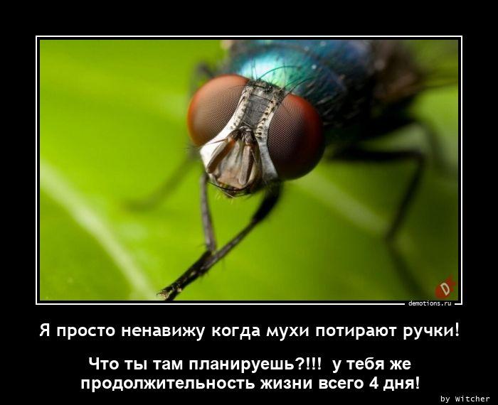 Я просто ненавижу когда мухи потирают ручки!