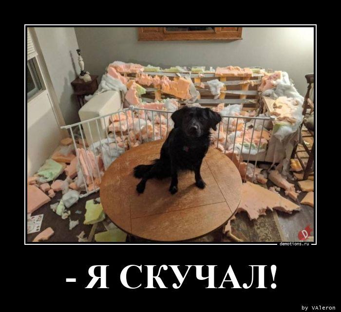 - Я СКУЧАЛ!