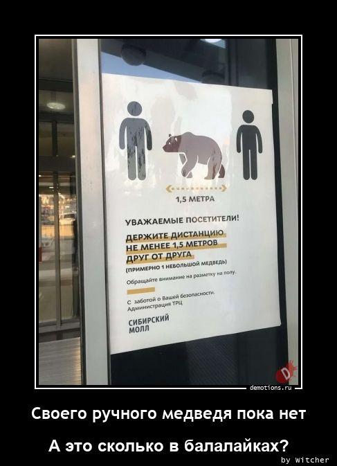 Своего ручного медведя пока нет