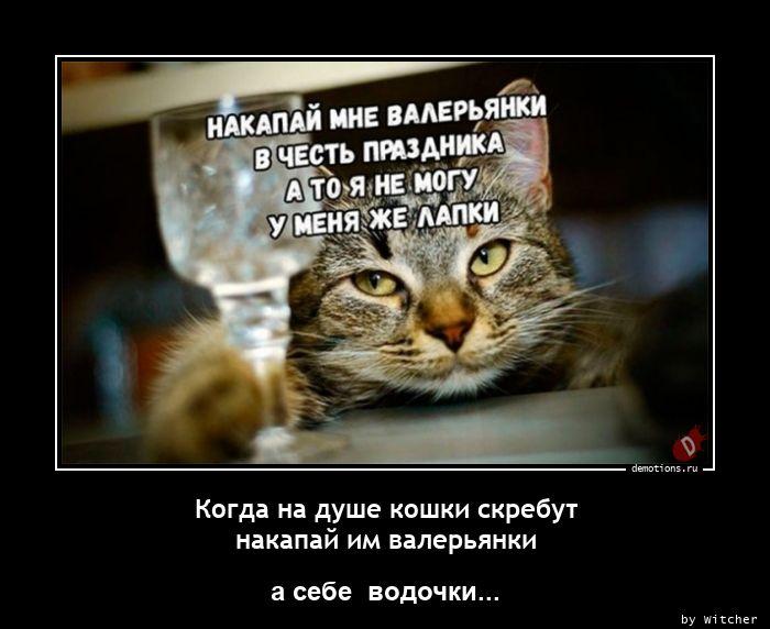 Когда на душе кошки скребут  накапай им валерьянки