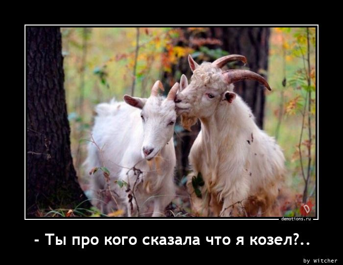 - Ты про кого сказала что я козел?..