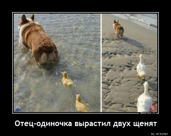 Отец-одиночка вырастил двух щенят