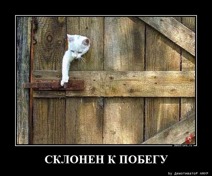 СКЛОНЕН К ПОБЕГУ