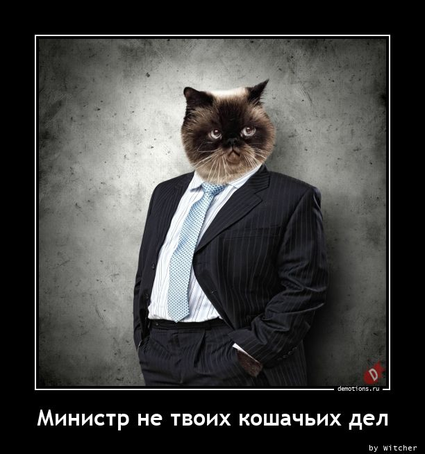 Министр не твоих кошачьих дел
