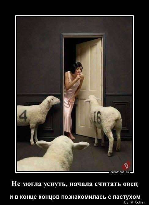 Не могла уснуть, начала считать овец