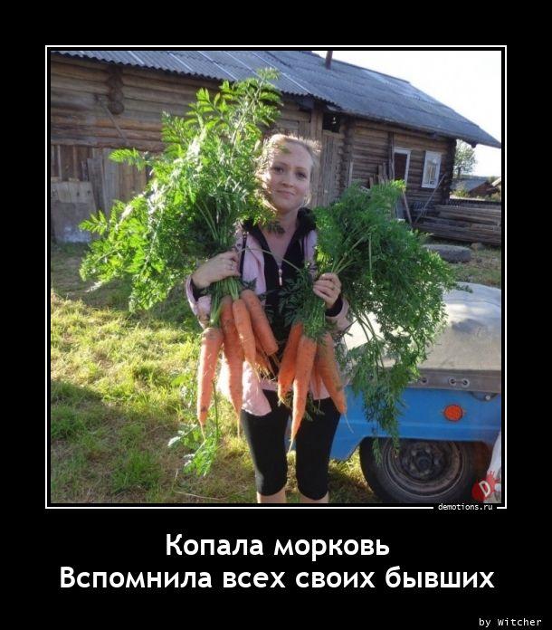 Копала морковь  Вспомнила всех своих бывших
