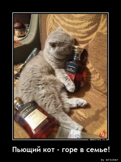Пьющий кот - горе в семье!