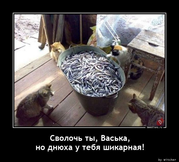 Сволочь ты, Васька, но днюха у тебя шикарная!