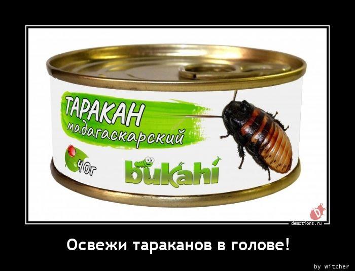 Освежи тараканов в голове!