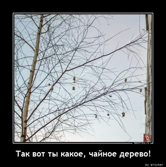 Так вот ты какое, чайное дерево!
