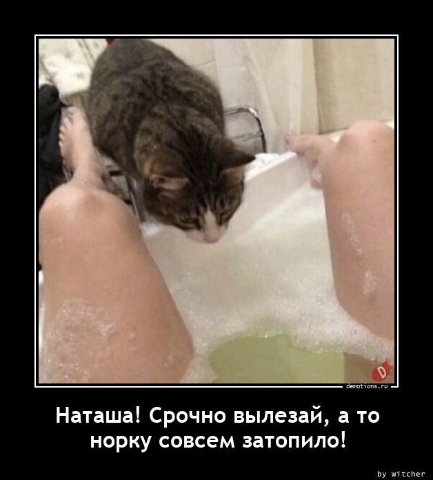Наташа! Срочно вылезай, а то норку совсем затопило!