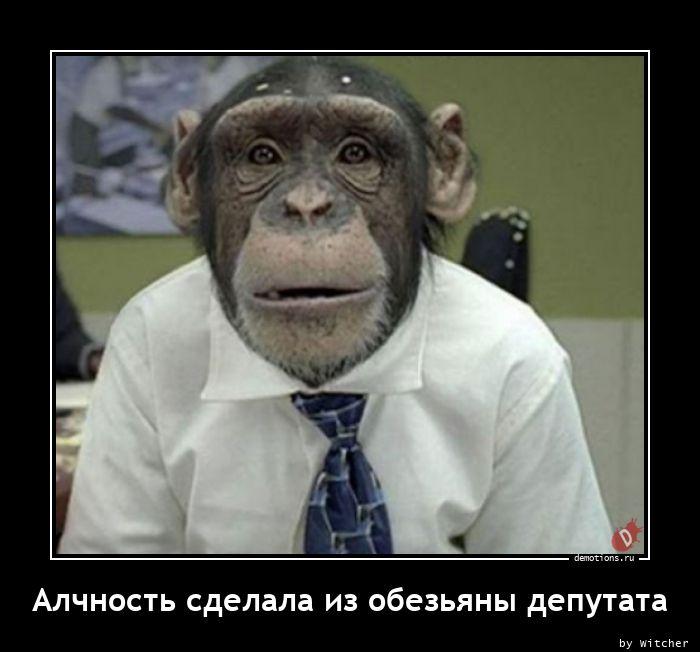 Алчность сделала из обезьяны депутата