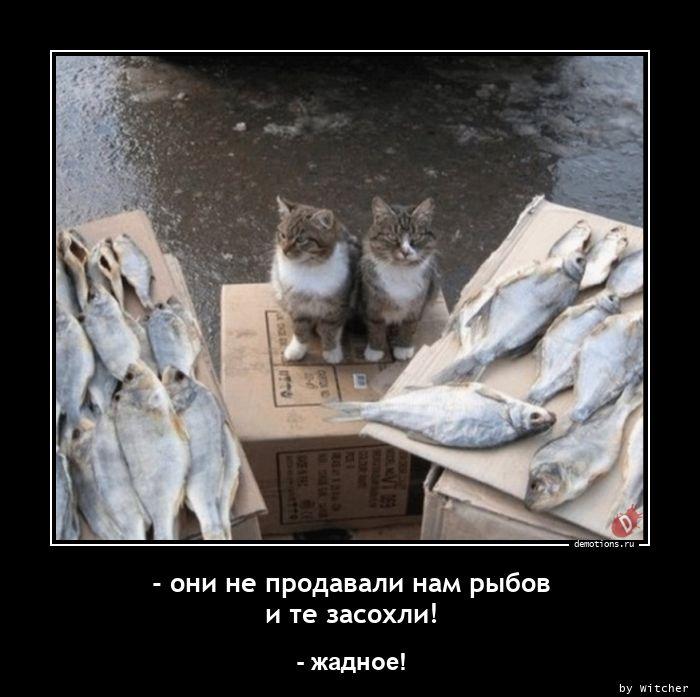 - они не продавали нам рыбов и те засохли!