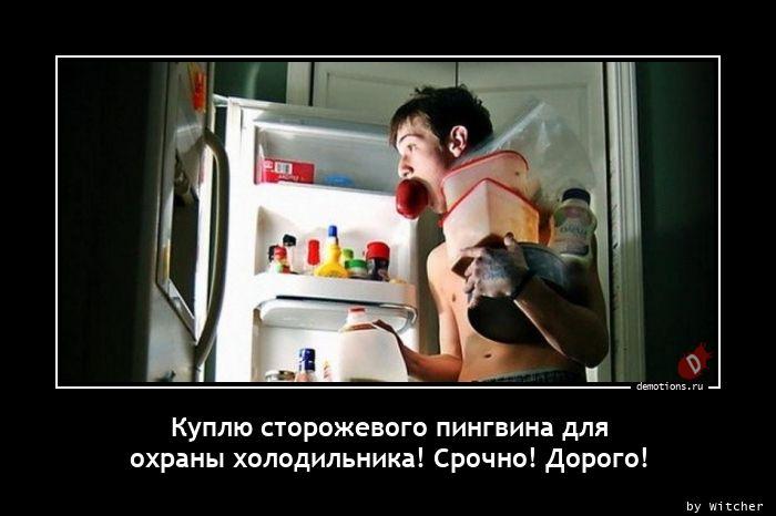 Куплю сторожевого пингвина для  охраны холодильника! Срочно! Дорого!